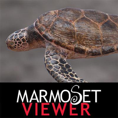 Yuuki morita turtle