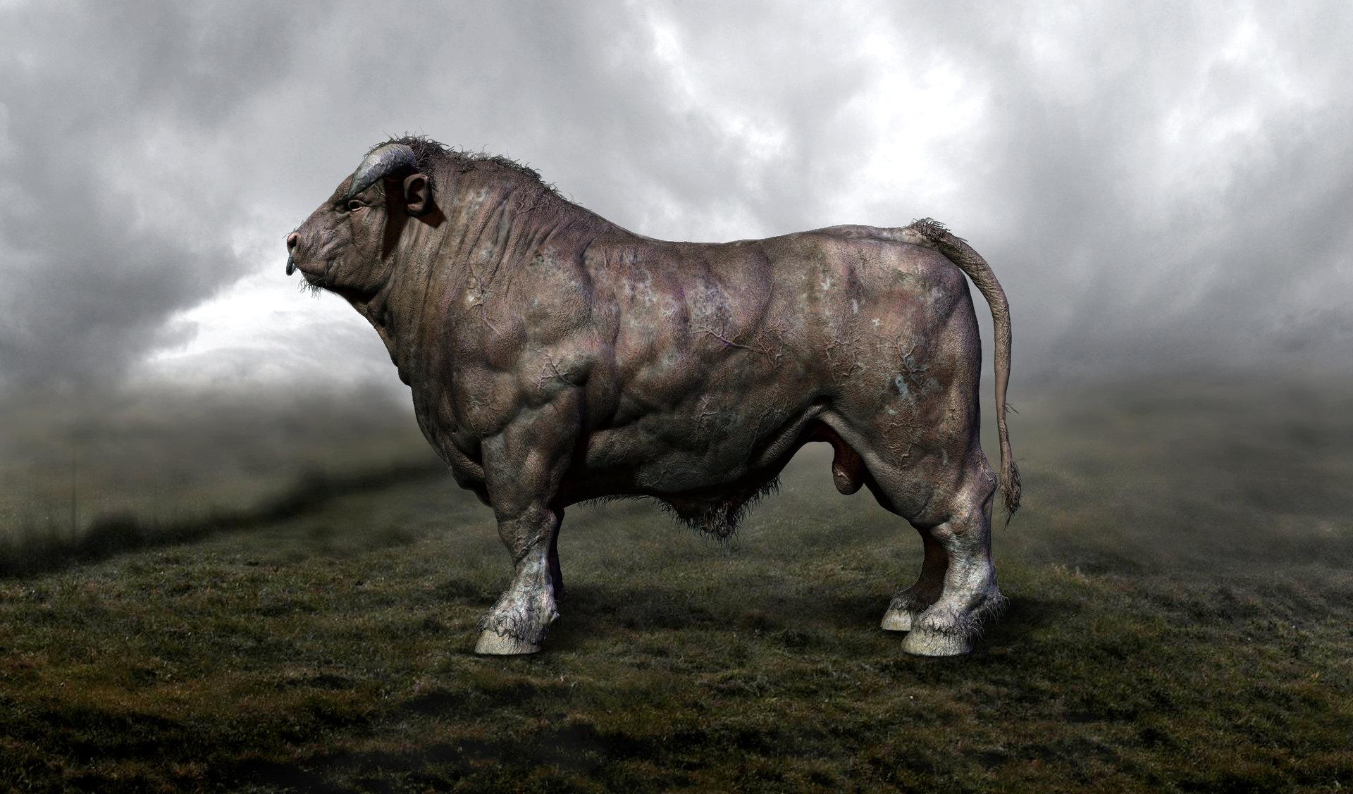Daniel Midholt - Anatomy study - Bull