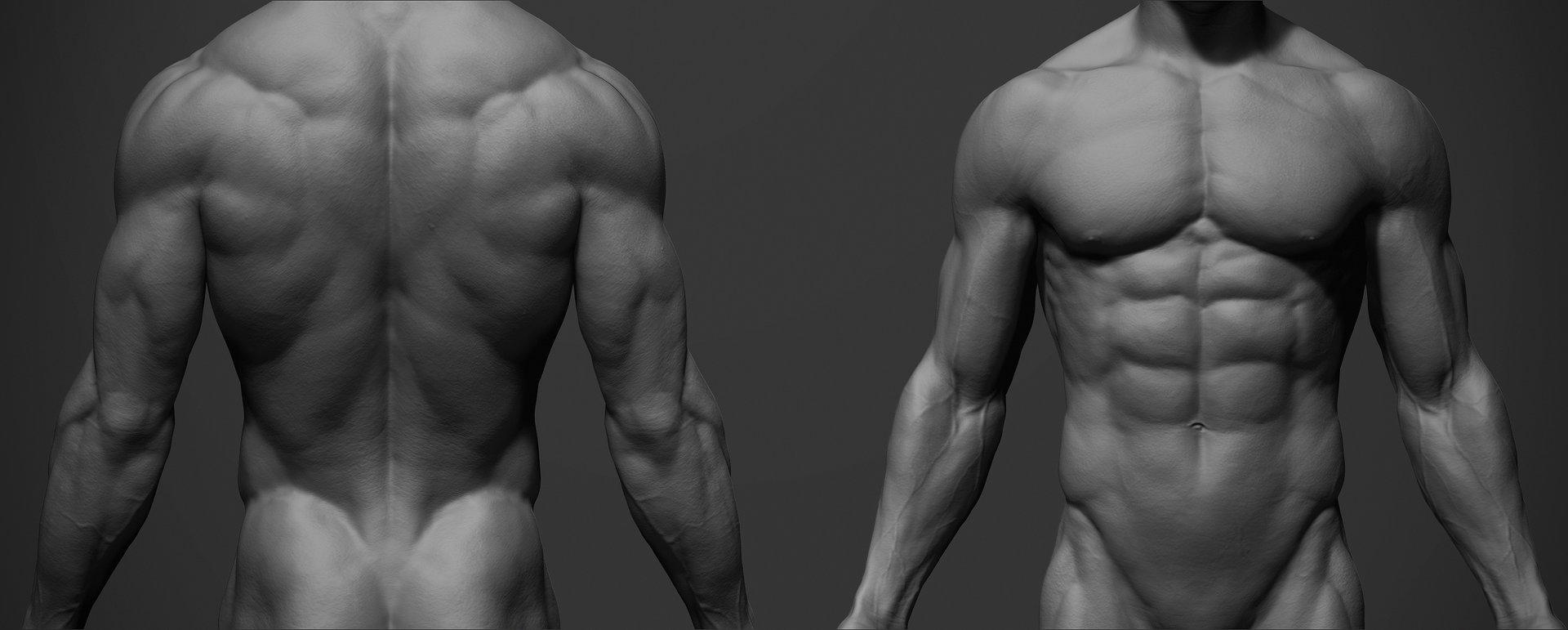 ArtStation - Male Anatomy Ref, adam skutt