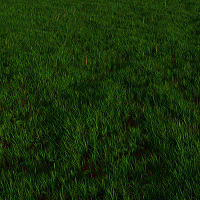 Chris ebbinger grassfield