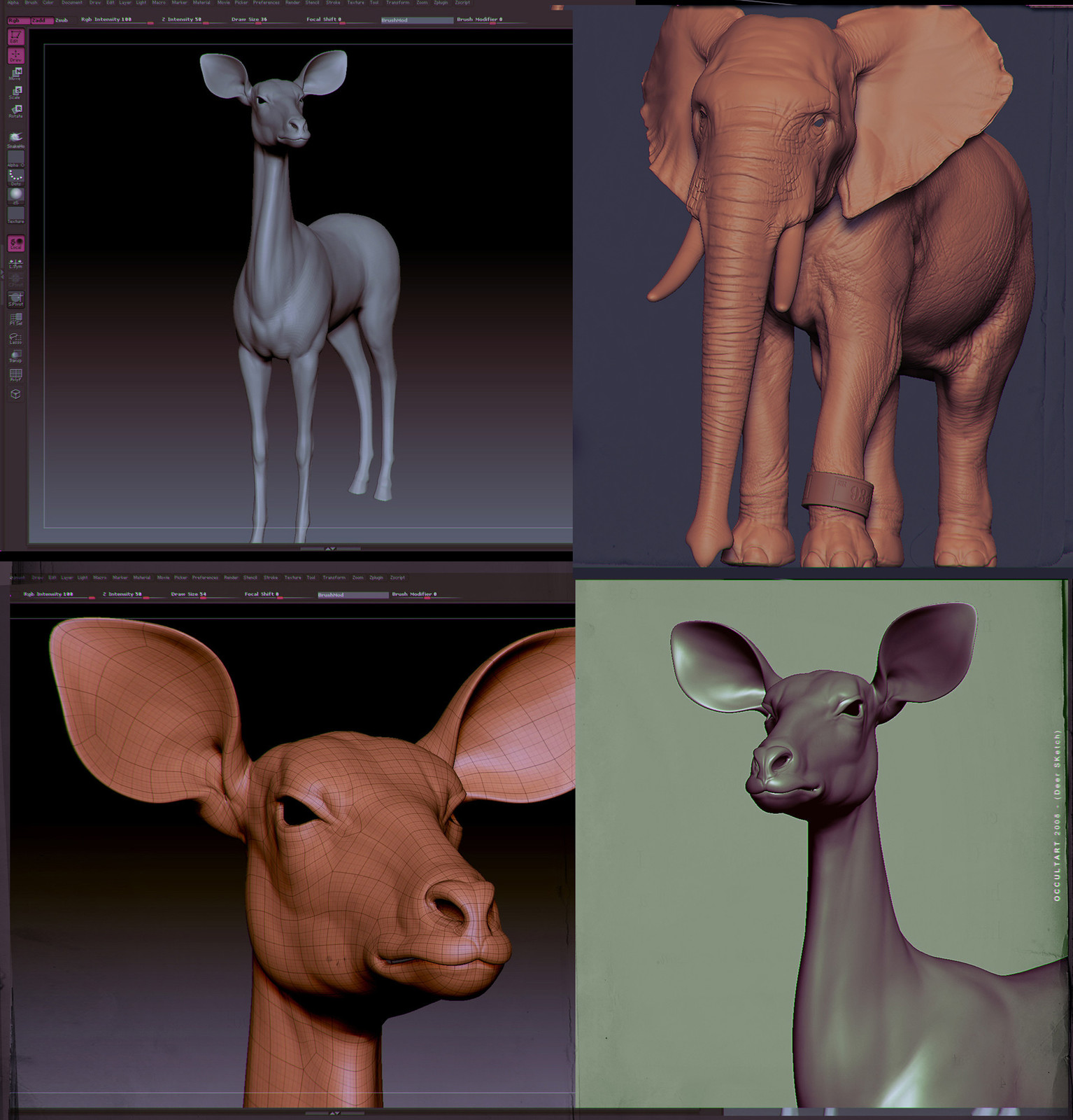 Animal Studies (OLD)