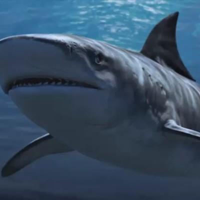 Martin krol shark 02