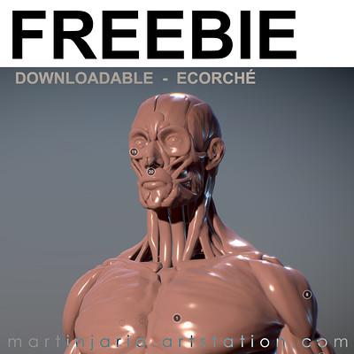 Martin jario freebie ecorche