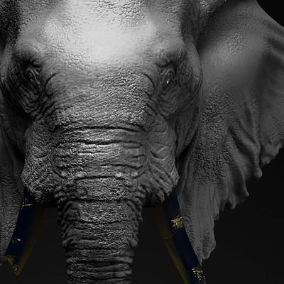 Anjar pratama elephas maximus sumatranus thumb