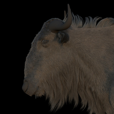 Antepost bull 03