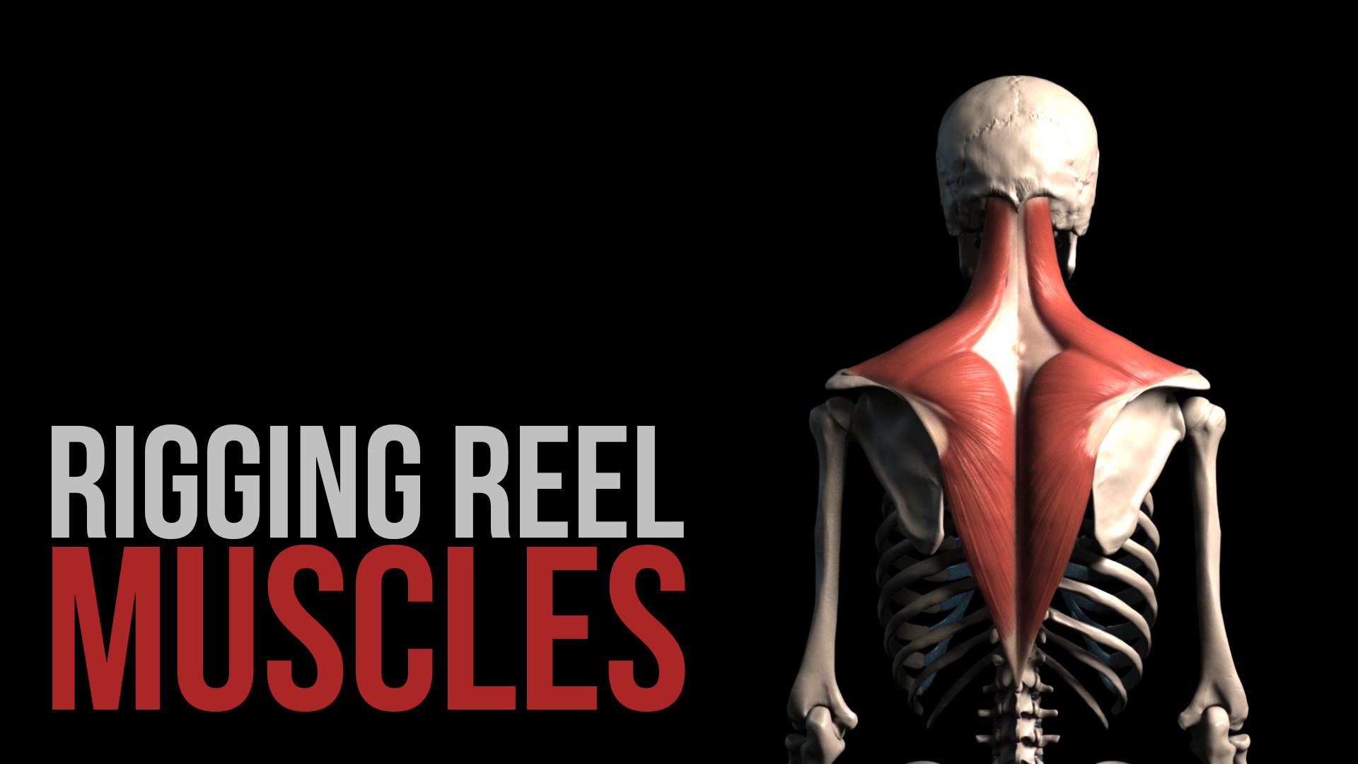 ArtStation - Anatomy Rigging demoreel, Alexander Lee