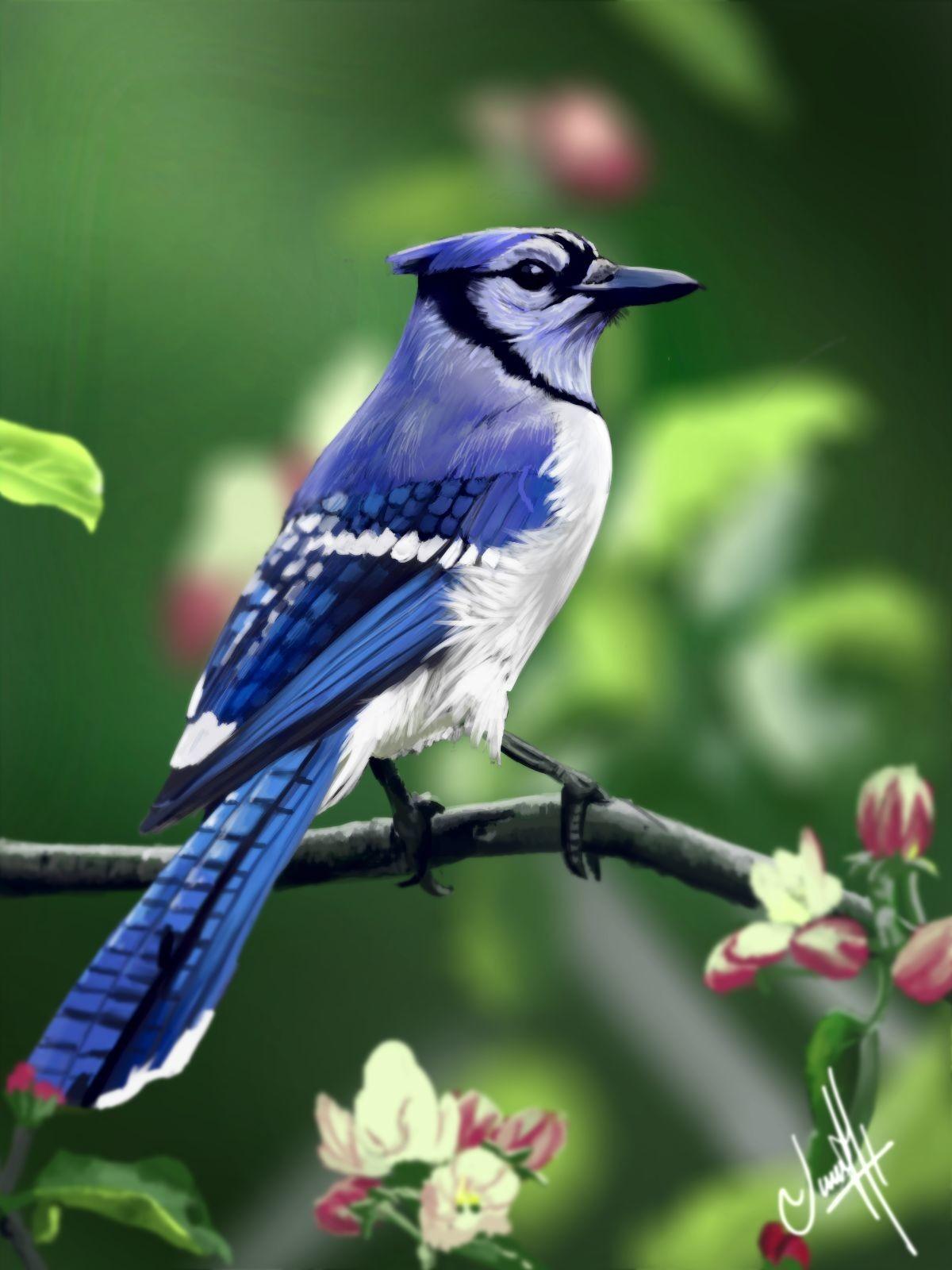 Color Study Krita 4 0 Blue Jay