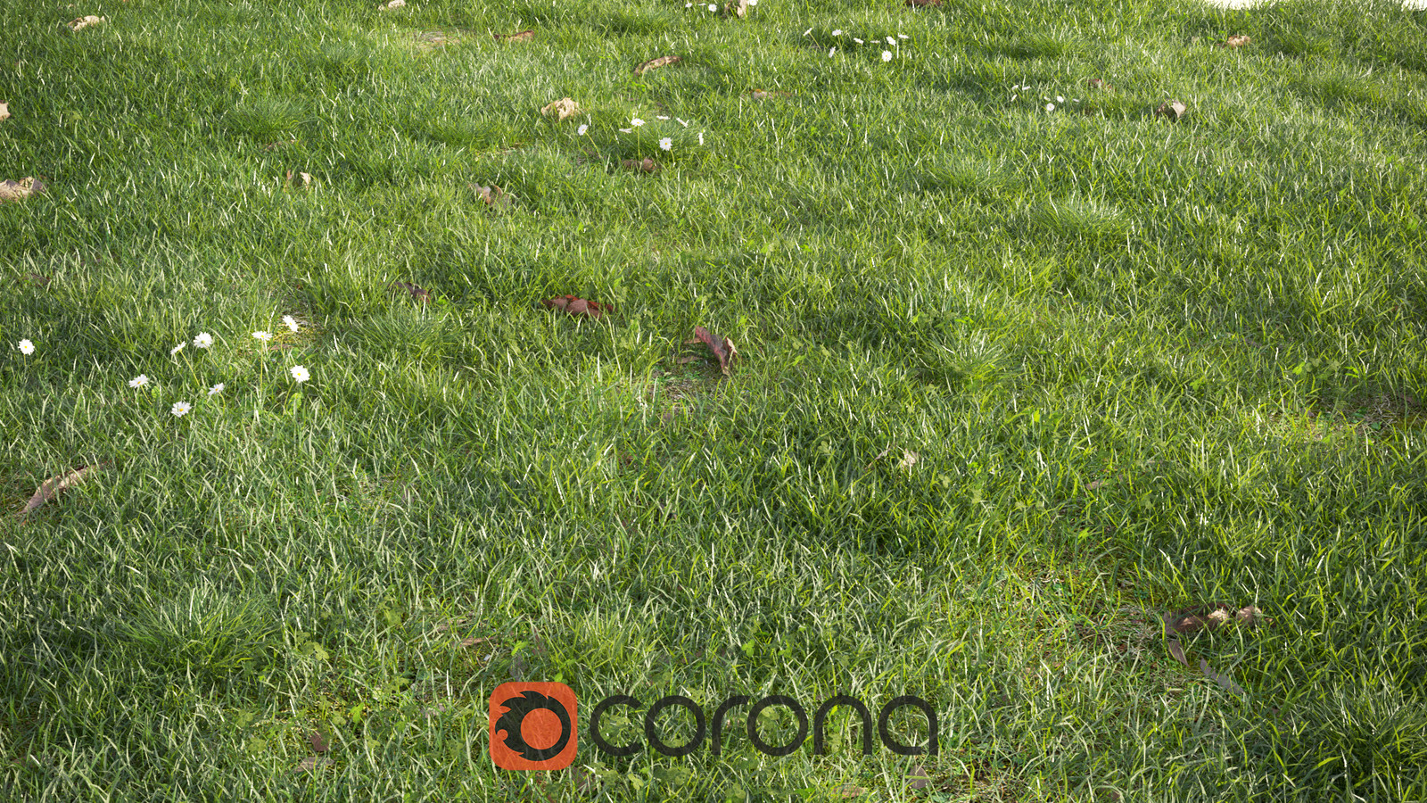 Corona Renderer - Realistic Grass