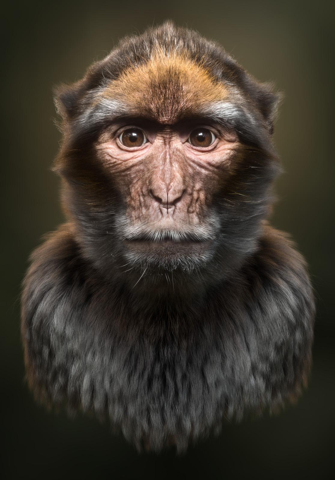 Monkey (Alternate)