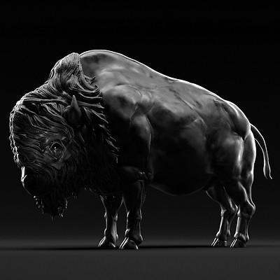 Nimrod zaguri bison 02 c