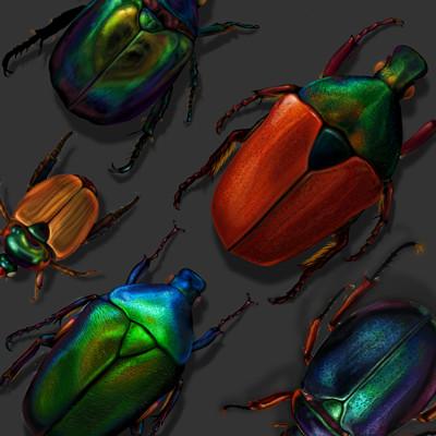 Alina godfrey beetle compthumb