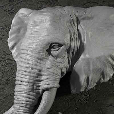 Nacho riesco gostanza elefante