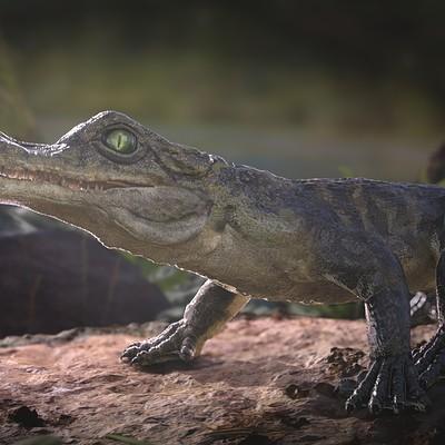 Karin wolf karin wolf alligator