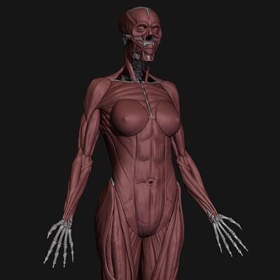 Sanket tonde torso close