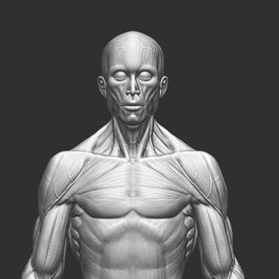 Andre wahl anatomystudy ecorche