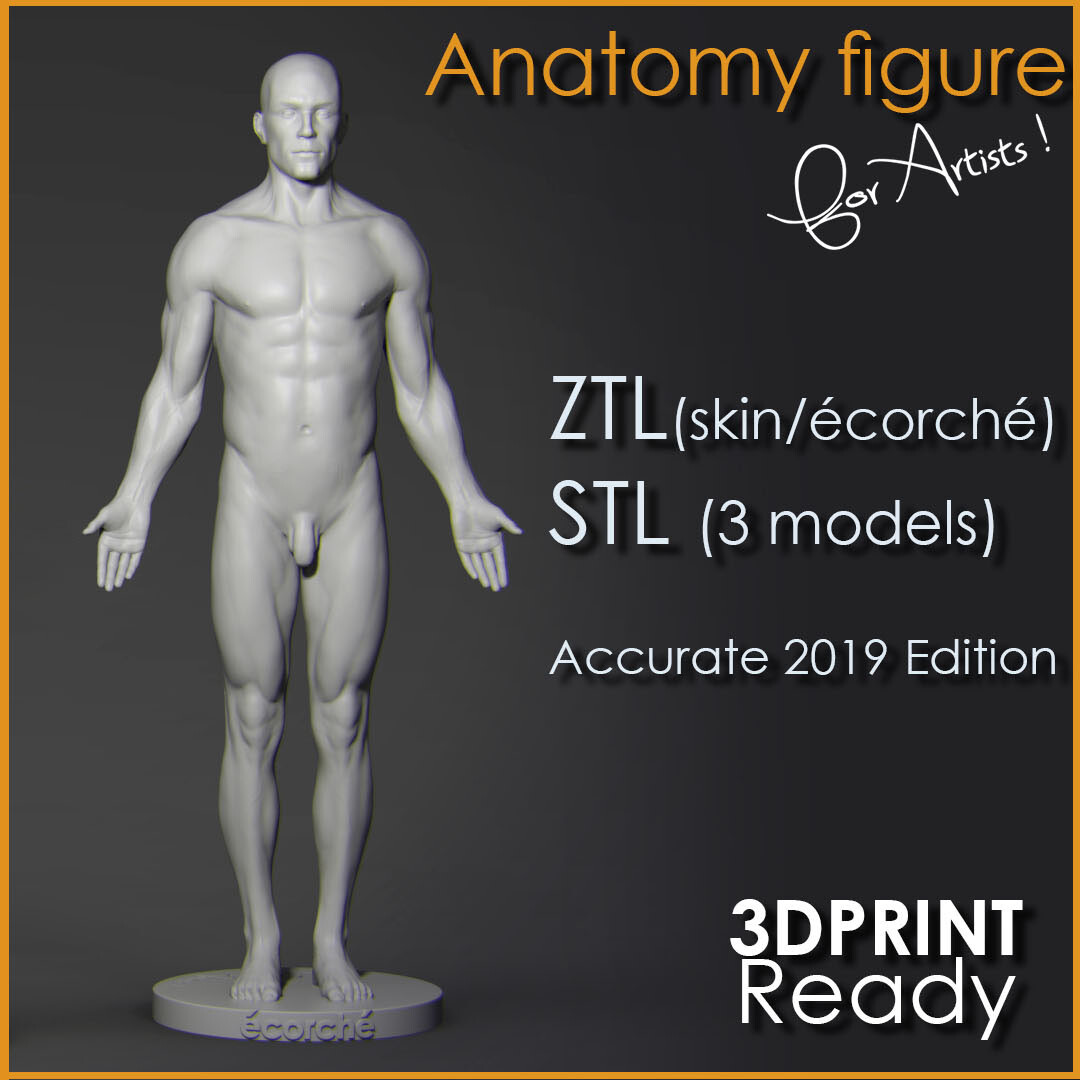 Anatomy Figure for Artists !