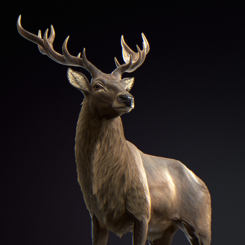 Red Deer (Real-time)