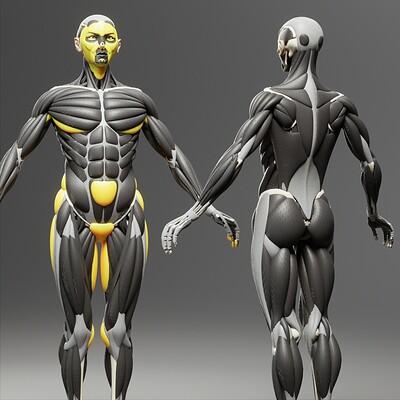 Wanoco 4d anatomy human 64