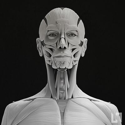 Nikolaos kaltsogiannis female anatomy echorche thubnail 01