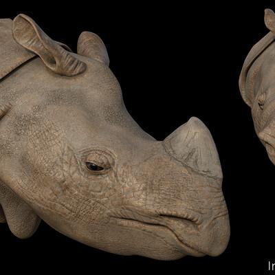 Hans palacios hans palacios hanspalacios rhino 01