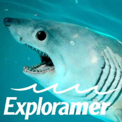 Exploramer - Virtual Dissection