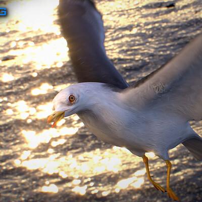 Nonecg 3d nonecg 3d seagull 01