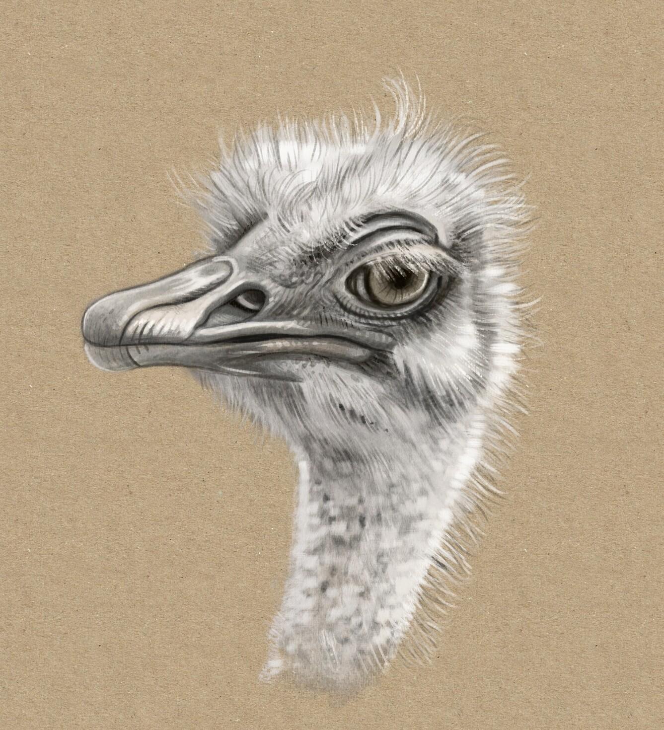 Weekly Sketches: Birds