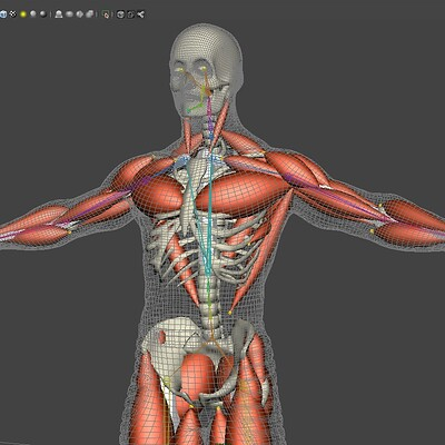 Saul barreto saul barreto spaceguy muscles