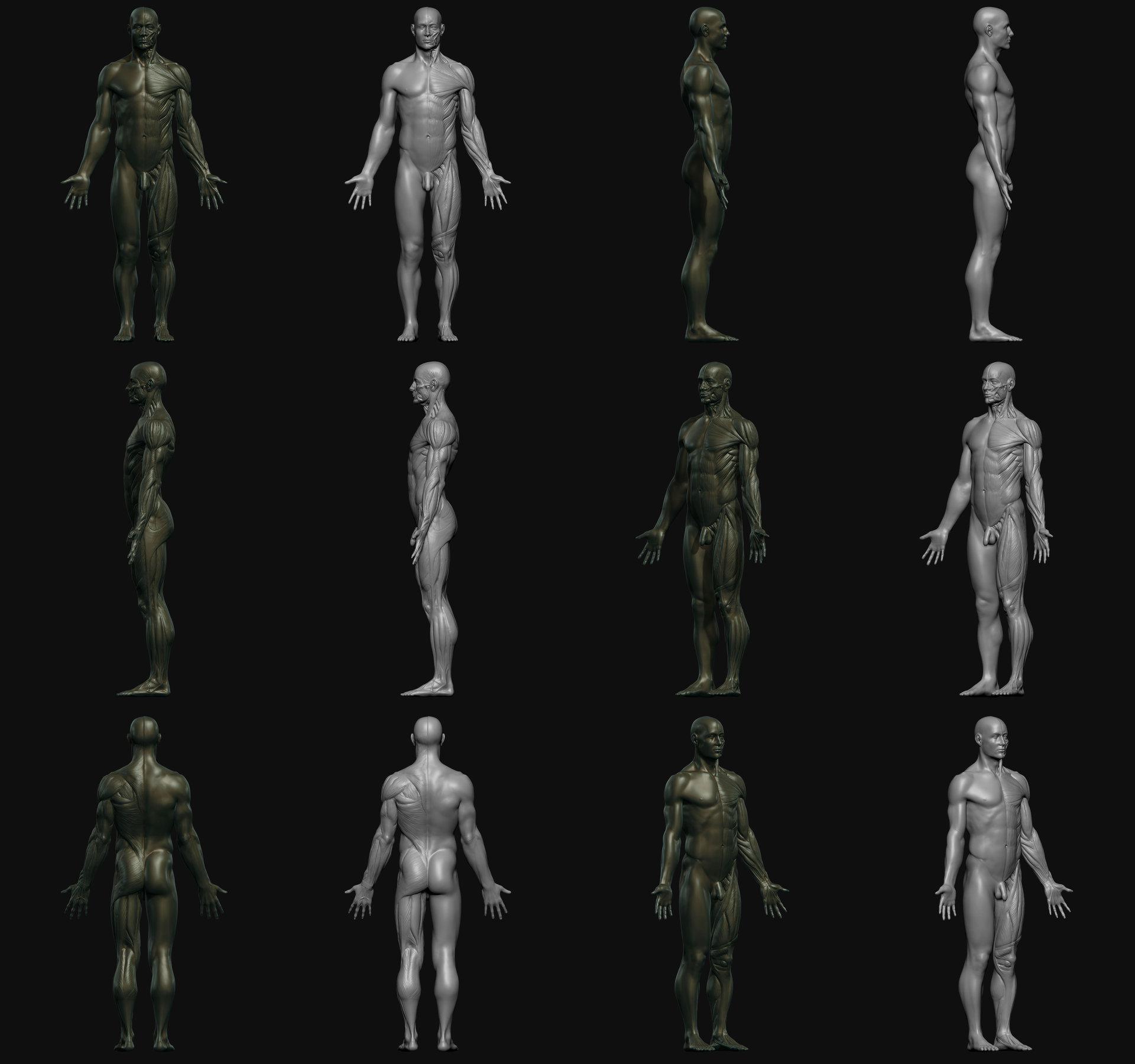Artstation 3d Total Male Anatomy Figure Federico Scarbini