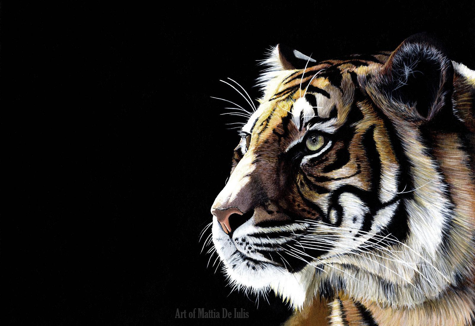 Tigre web