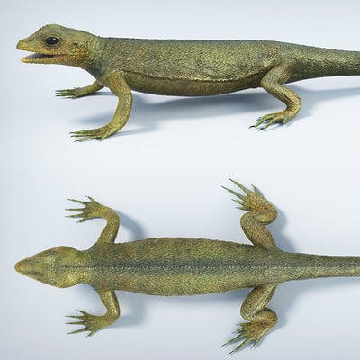 Calin iordache hylonomus
