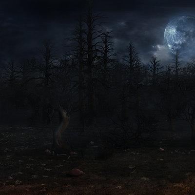 Nicolas zuriaga forest shot 1