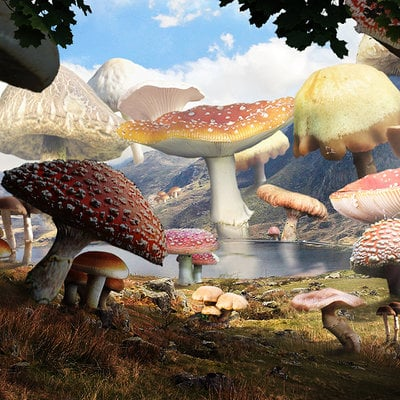 Nicolas zuriaga mundo de hongos
