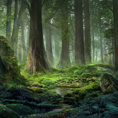 Jeremy chong forest1