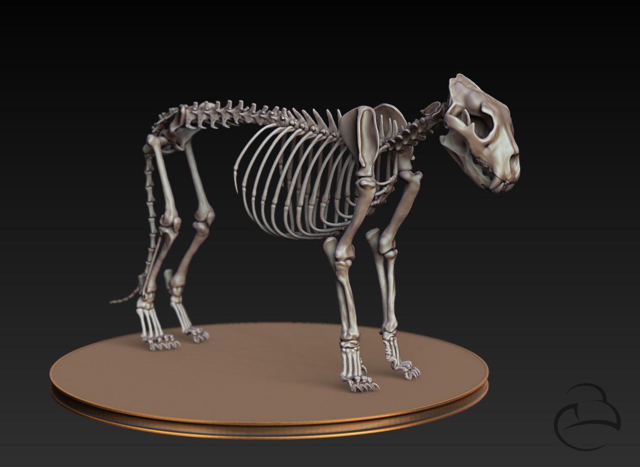 ArtStation - Lion skeleton anatomy, Peter Bara