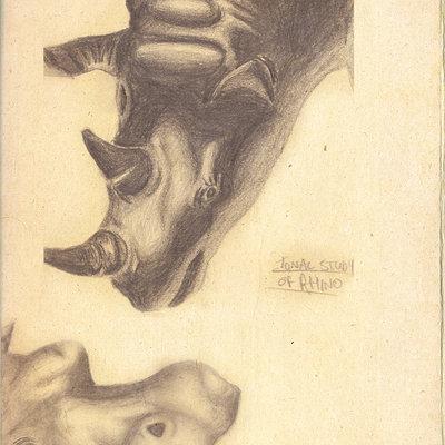 Pete mc nally sketch pencil nathistmuseum rhinohippo