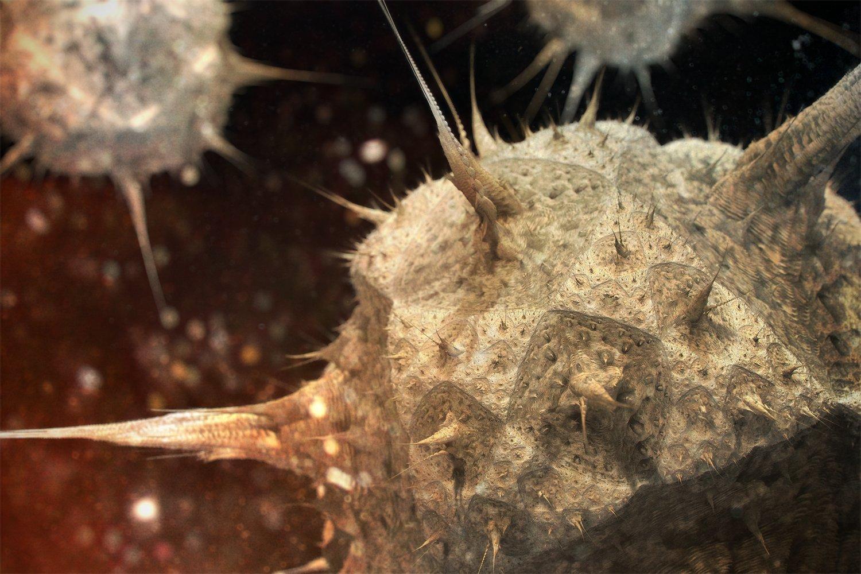 Ramon pasternak asteroid4escenaorbs dof 180810 small