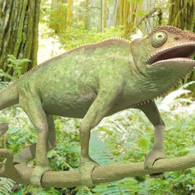 Timothy klanderud chameleon renderposed