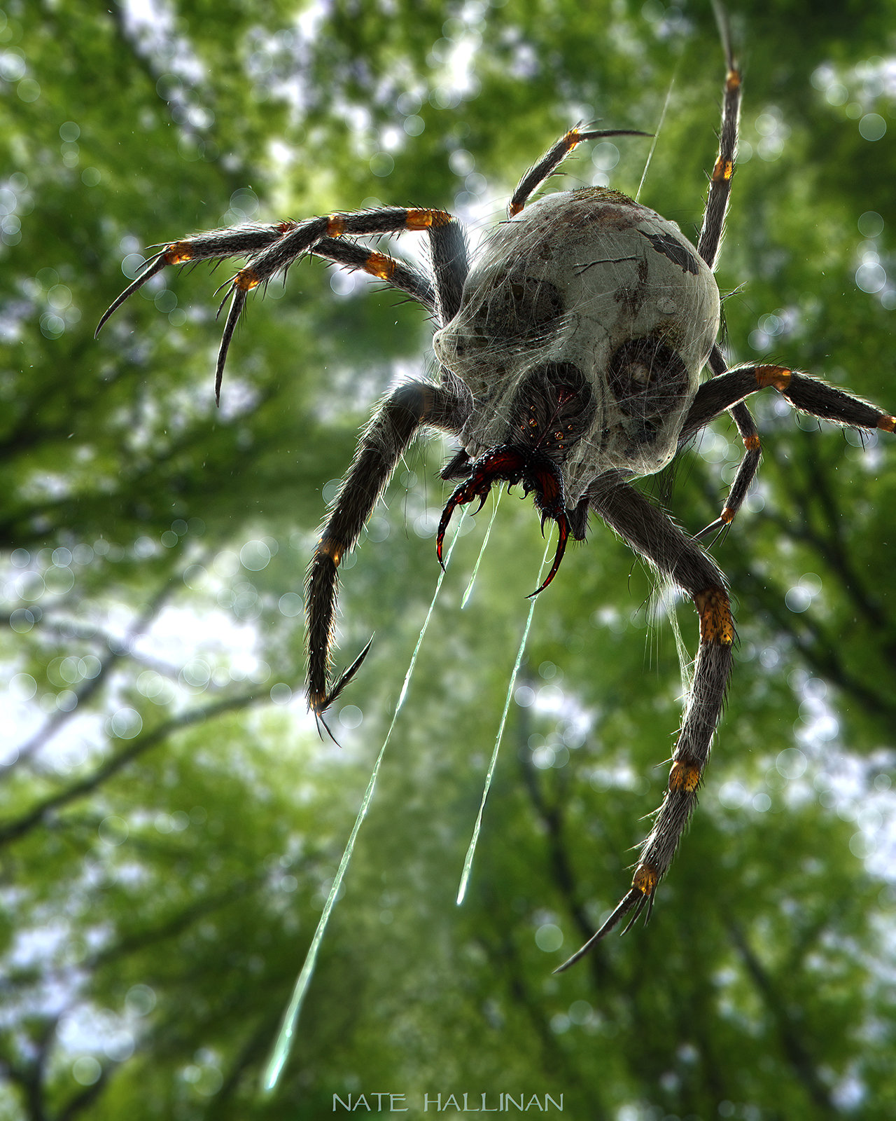 The Wildlife of the First Level Nate-hallinan-skulltula-final-md