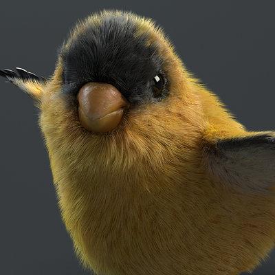 Daniel garcia bird front