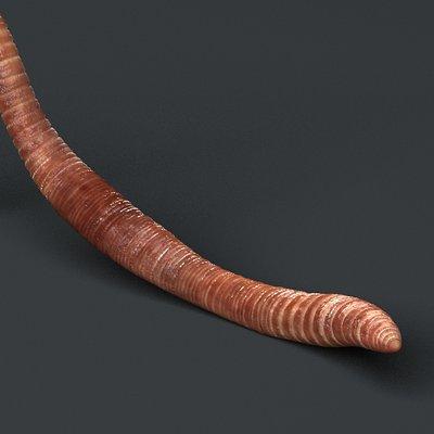 Daniel garcia worm 1