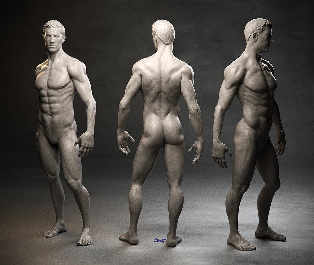 Sampo Rask - Male Anatomy Study