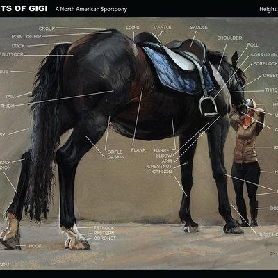 Points of gigi a north american sport pony