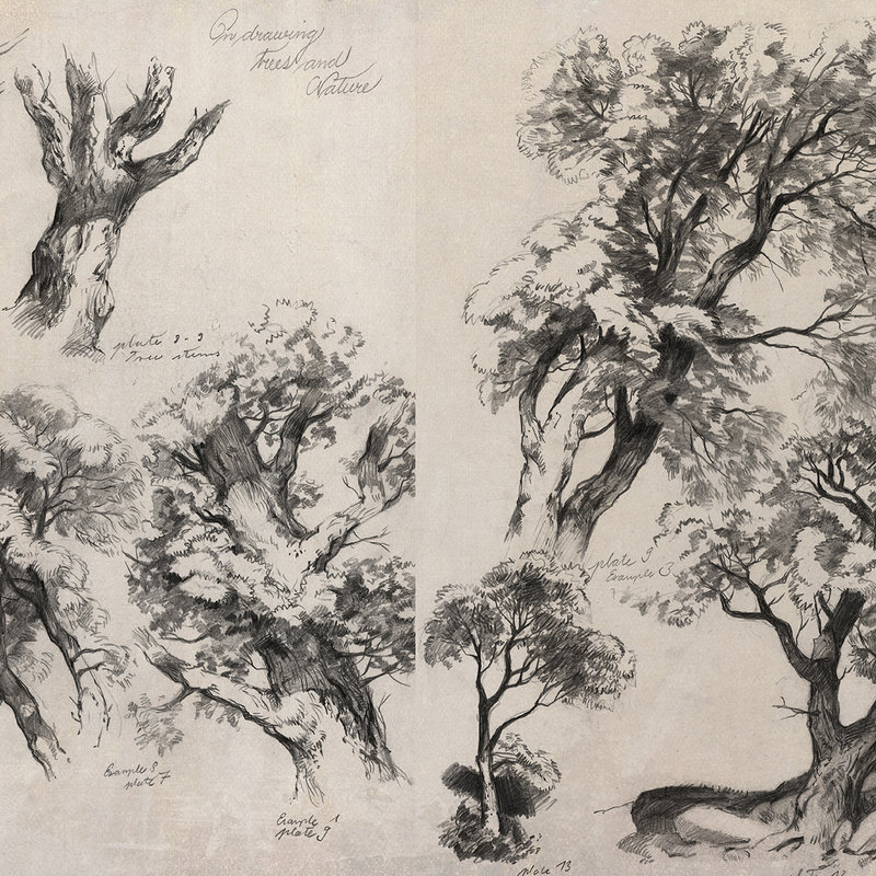 Tree & Foliage Studies