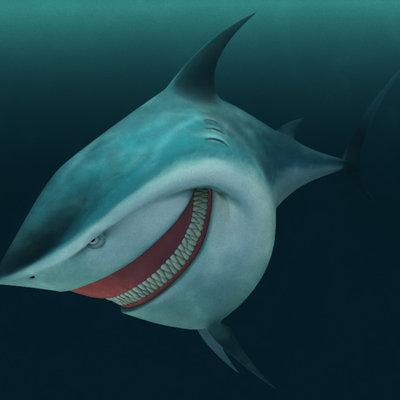 Elias glasch shark 01