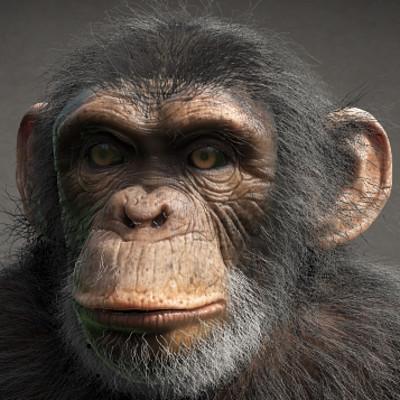 Jay howse chimp turntable frames