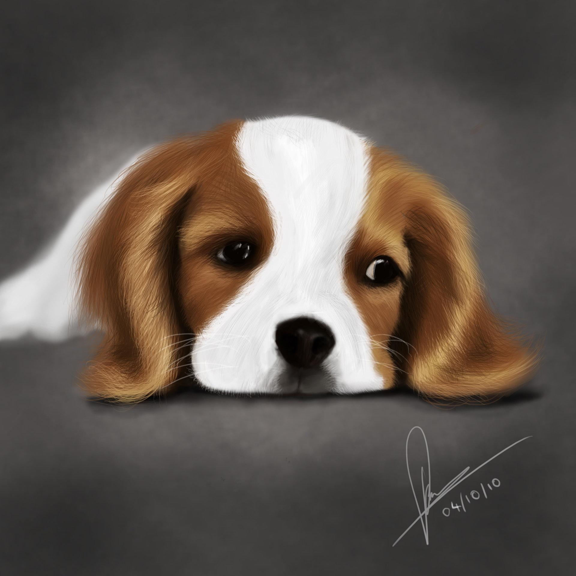 Raveen rajadorai puppy 002bb