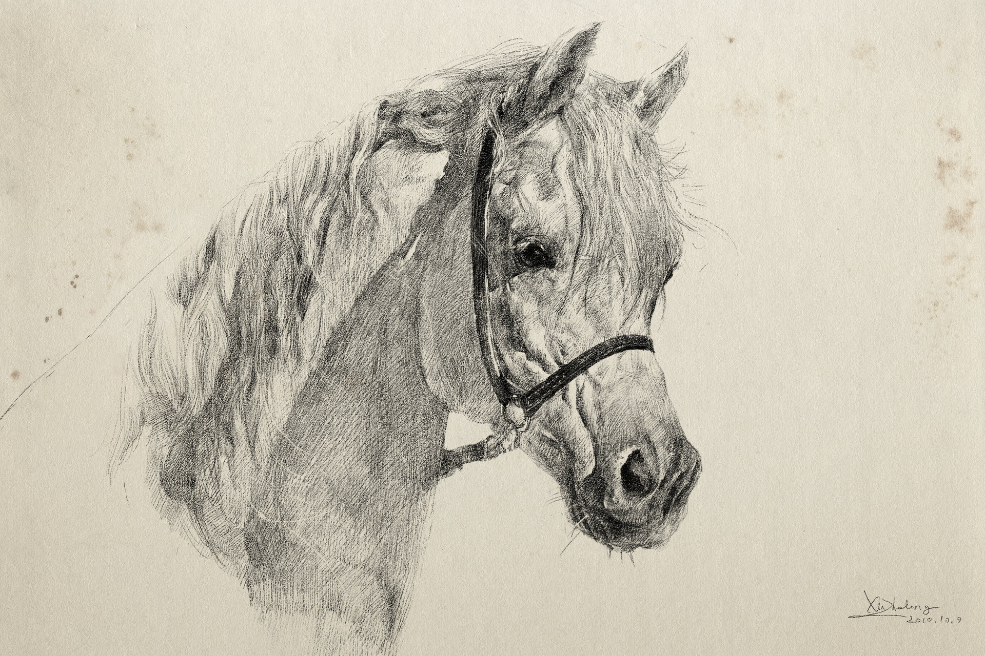 Zhelong xu horse