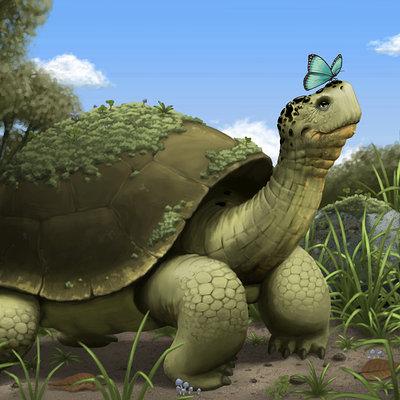 Andrew mcintosh 2010 12 tortoise