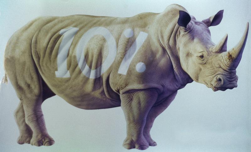 Daren horley rhino